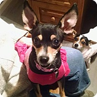 Adopt A Pet :: Ziggy - Milton, GA