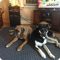 Adopt A Pet :: Rayna - Aurora, CO