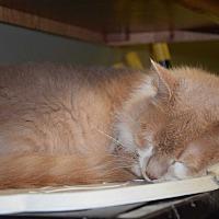 Adopt A Pet :: PussPuss - Pottsville, PA