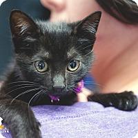 Adopt A Pet :: Jackie - Baytown, TX