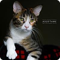 Adopt A Pet :: Priscilla - Edwardsville, IL