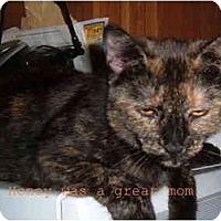 Adopt A Pet :: Honey - Albany, NY