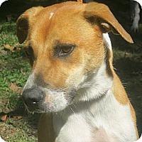 Adopt A Pet :: Skeeter - Jacksonville, FL