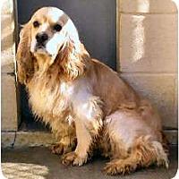 Adopt A Pet :: Sunny - Menomonee Falls, WI