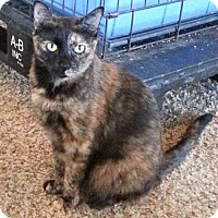 Adopt A Pet :: Nissa - Redding, CA