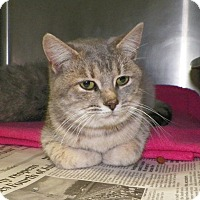 Adopt A Pet :: Penelope - Dover, OH