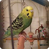 Adopt A Pet :: Girl - Lenexa, KS