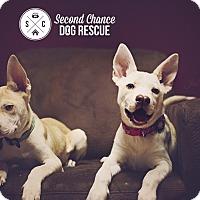 Adopt A Pet :: Beatrix - Las Vegas, NV