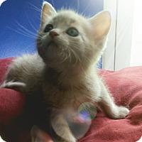 Adopt A Pet :: Ronin - Fairborn, OH