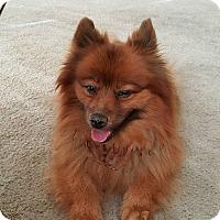 Adopt A Pet :: Teddy - Las Vegas, NV