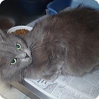 Adopt A Pet :: Sugar Plum - Newport, NC