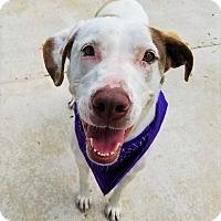 Adopt A Pet :: Miley - Umatilla, FL