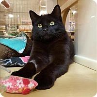 Adopt A Pet :: Dipity - Sherwood, OR