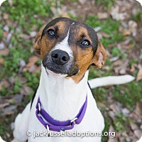 Adopt A Pet :: Peyton - Conyers, GA