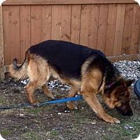 Adopt A Pet :: DESOTO - Winnipeg, MB