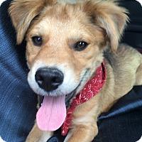 Adopt A Pet :: scruffy - Spring, TX