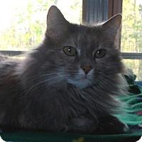 Adopt A Pet :: Dutchess - Templeton, MA