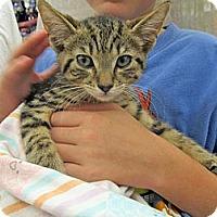 Adopt A Pet :: Mookie - Riverhead, NY