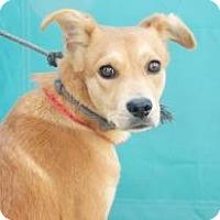 Adopt A Pet :: Shane - Seattle, WA