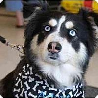 Adopt A Pet :: Tucky - Gilbert, AZ
