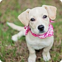 Adopt A Pet :: Nola - Adoption Pending - Kingwood, TX