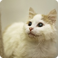 Adopt A Pet :: Prince Owly - Chicago, IL