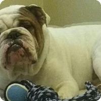 Adopt A Pet :: Remington - Odessa, FL