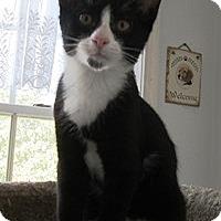Adopt A Pet :: Bernie - Lebanon, PA