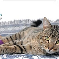 Adopt A Pet :: Tre - Belle Chasse, LA