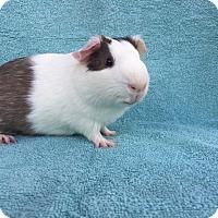 Adopt A Pet :: Jasper - Imperial Beach, CA