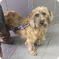 Adopt A Pet :: Max - ADOPTION PENDING! - Hillsboro, IL