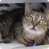 Adopt A Pet :: Nyla - Bradenton, FL