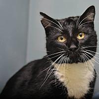 Adopt A Pet :: Henry - Pittsburg, KS
