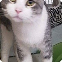Adopt A Pet :: Damon - Warren, MI
