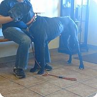 Adopt A Pet :: Mardi - Killeen, TX