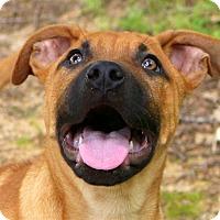 Adopt A Pet :: Blake~adopted! - Glastonbury, CT
