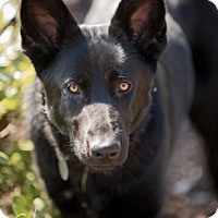 Adopt A Pet :: Stazzi - Modesto, CA