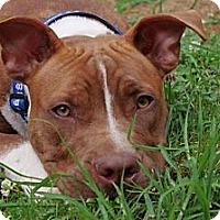 Adopt A Pet :: Paul - Reisterstown, MD