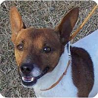 Adopt A Pet :: NAPOLEON - Phoenix, AZ