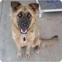 Adopt A Pet :: Teddy - Gardena, CA