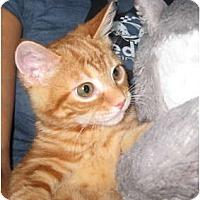 Adopt A Pet :: Red Fred - Deerfield Beach, FL