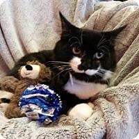 Adopt A Pet :: Moosetracks - Alexandria, VA