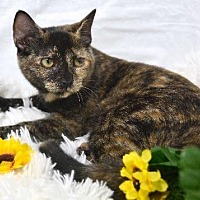 Adopt A Pet :: Brandy - St. Cloud, FL