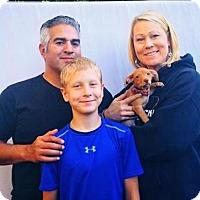 Adopt A Pet :: Jonathan - Sacramento, CA