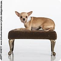 Adopt A Pet :: Honey - Dallas, TX