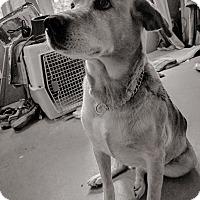Adopt A Pet :: Bailey - Chewelah, WA