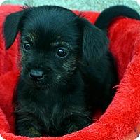 Adopt A Pet :: Fleetwood-Adoption pending - Bridgeton, MO