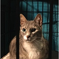 Adopt A Pet :: Shady - West Orange, NJ
