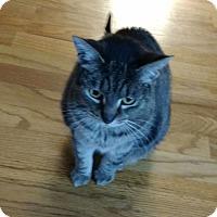 Adopt A Pet :: Cheetah - Cleveland, OH