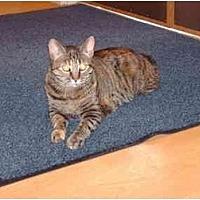 Adopt A Pet :: Mia - Fremont, MI